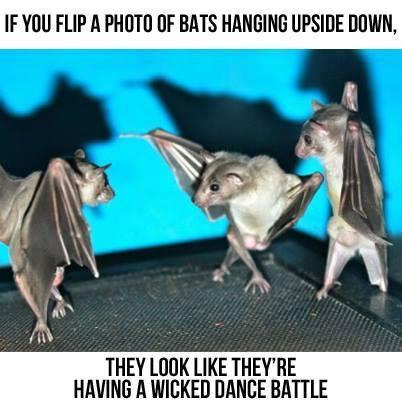batdancebattle
