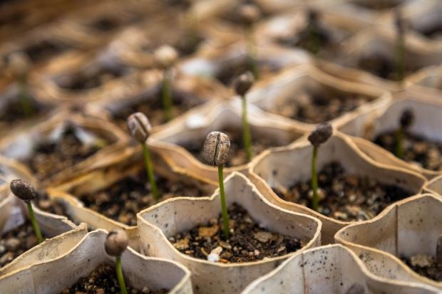 Soil - Plants